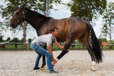 Ten best stretches to do with your horse